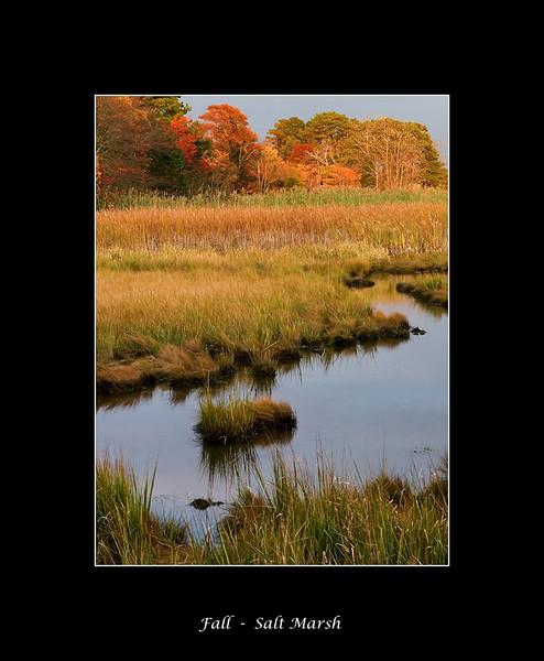 marsh-light.jpg