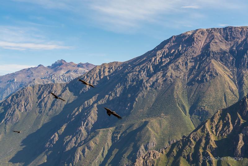 Colca Canyon-1214.jpg
