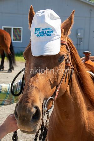 Anchorage Alaska State Quarter Horse Show