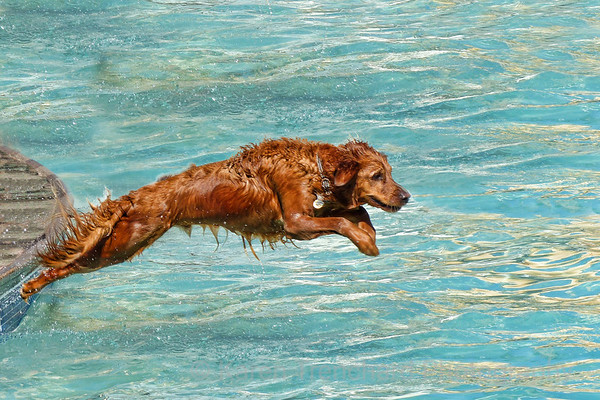 Freedom Service Dogs Doggie Plunge