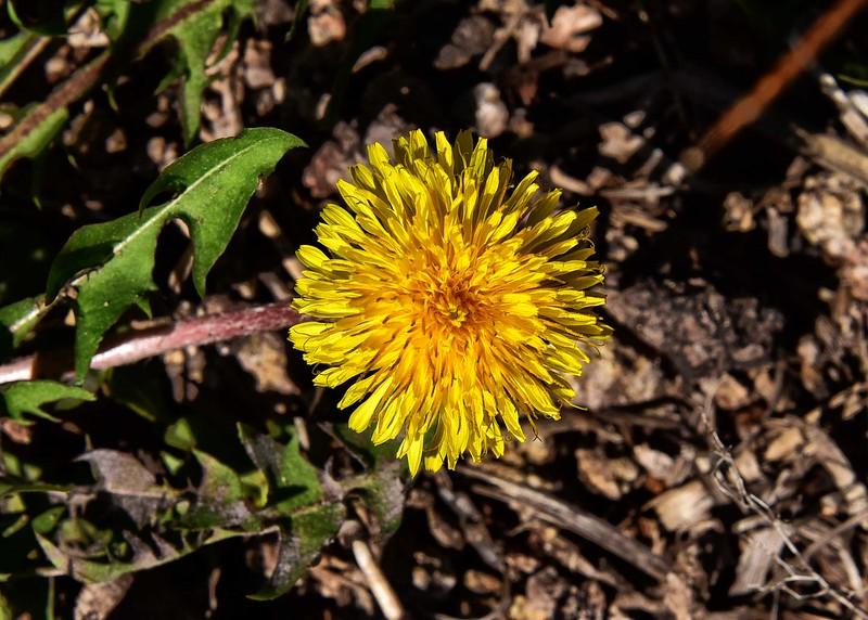 NEA_0160-7x5-Flower.jpg
