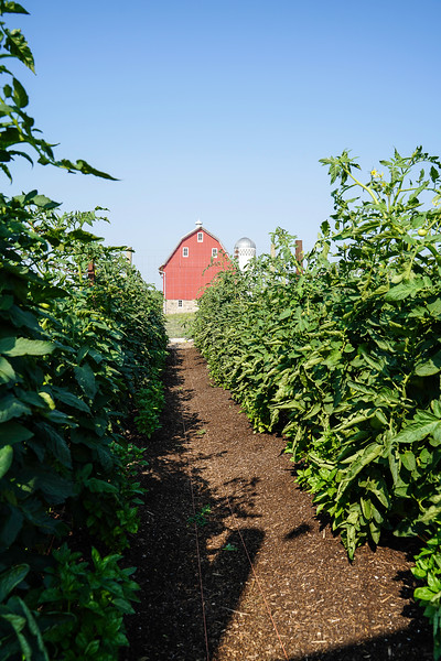 Arboretum Farm 8-19-25.JPG
