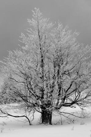 brrrr, sure gets cold in WV. 2/16-17/oh13