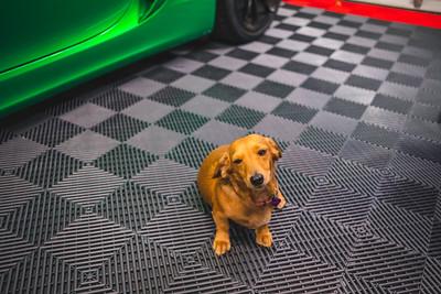 2020-11-14 Garage Dogs