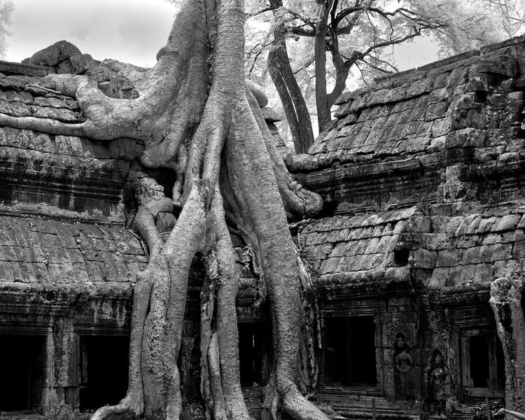 Roots6 c16x20.jpg