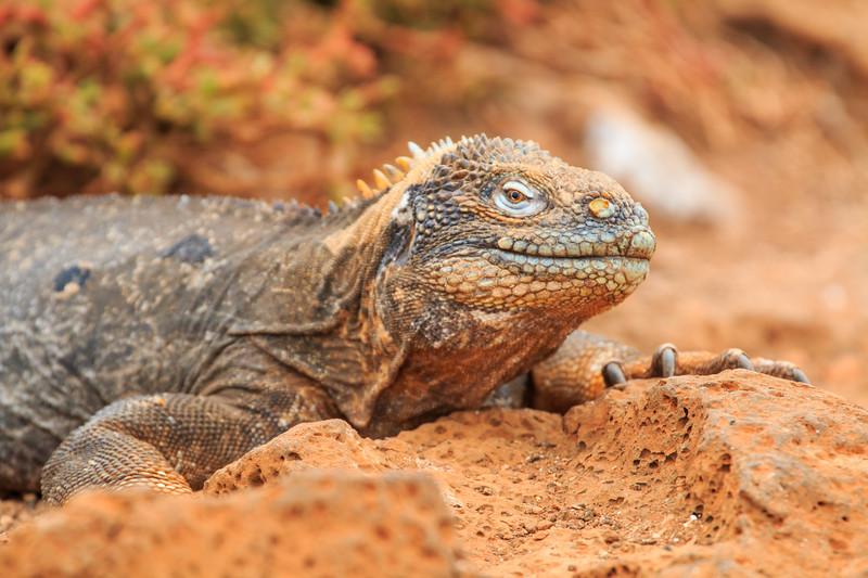 Galapagos Highlights