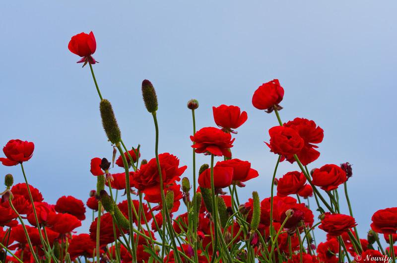 130428_045_FlowerField.jpg