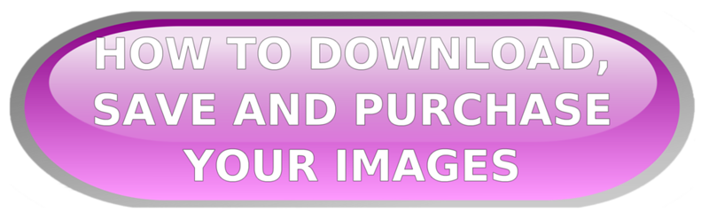 DOWNLOAD SAVE IMAGES 2 copy.png