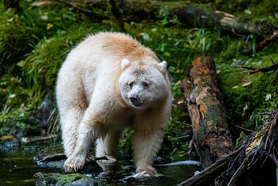 Great Bear Rainforest 2021