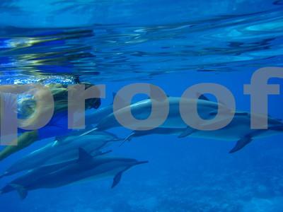 Dolphin Swim February 10 2009