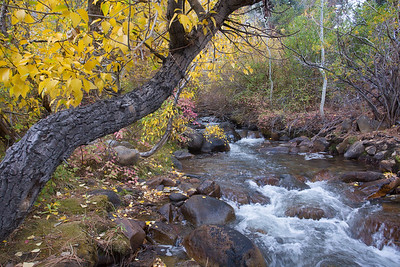 Eastern Sierras Fall Color 2015