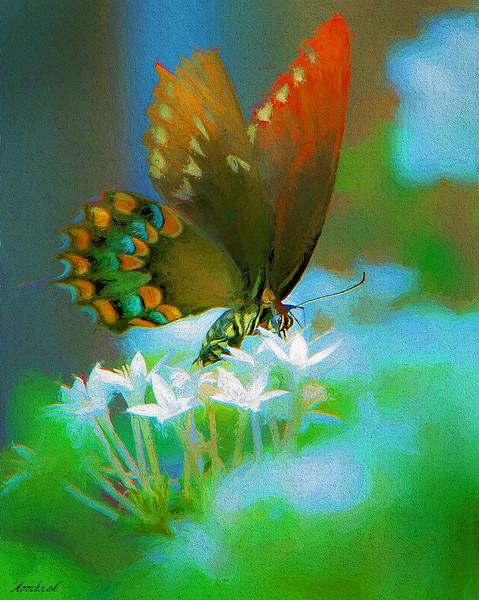 Butterfly_1106topaz-copy.jpg