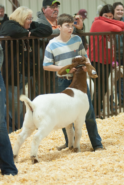 kay_county_showdown_goats_20191207-71.jpg