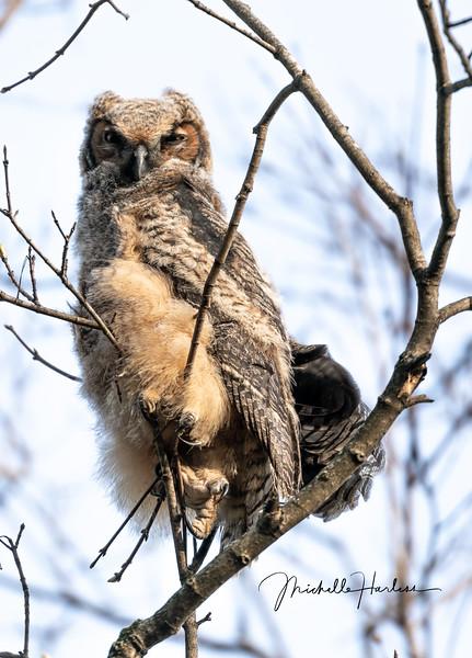 Eagle (1 of 1)-4.jpg