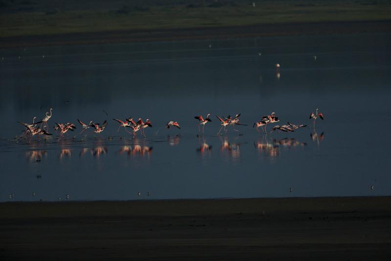 Serengeti_Feb_2013_FH0T6026.tiff.jpg