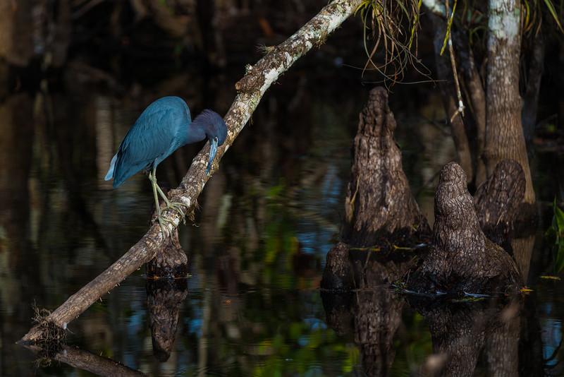 Everglades (11 of 60).jpg