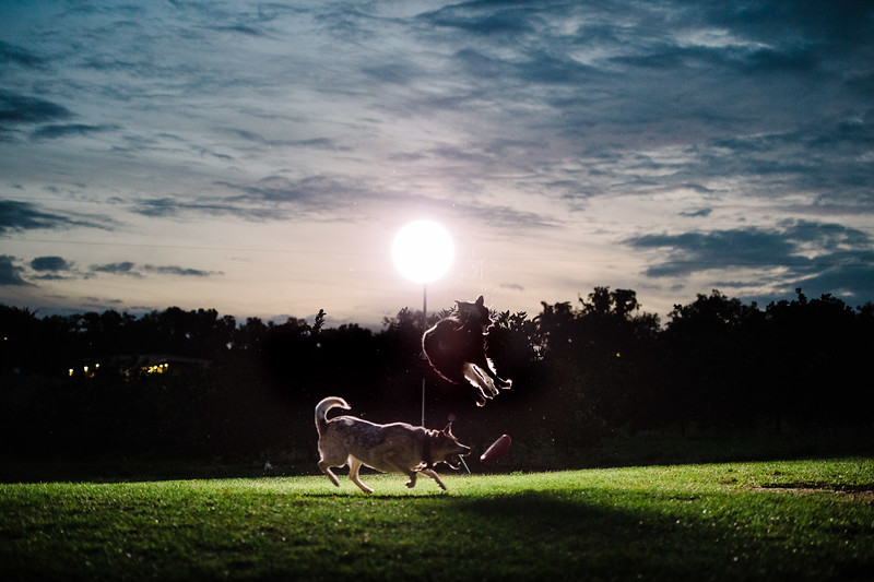 Tori & David dogs (10 of 10).jpg
