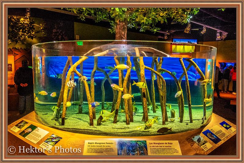 acquarium-7.jpg