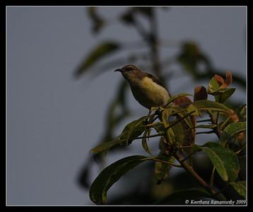 India June 2009 - Birds