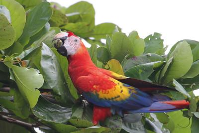 Costa Rica, Christmas 2012-2013