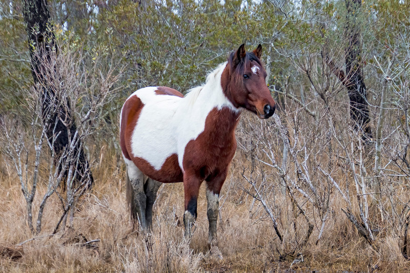 2021 Pony Spotting