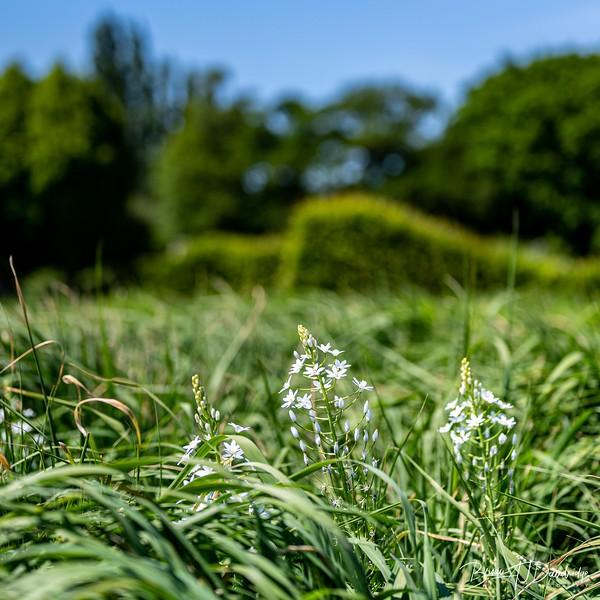 Sussex Prairie Gardens Z6-3774.jpg