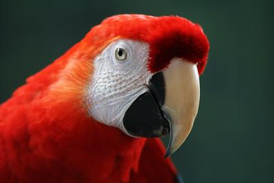 Links to BIRDS in ZOOS