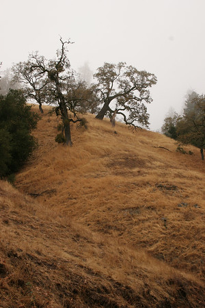 Henry Coe State Park