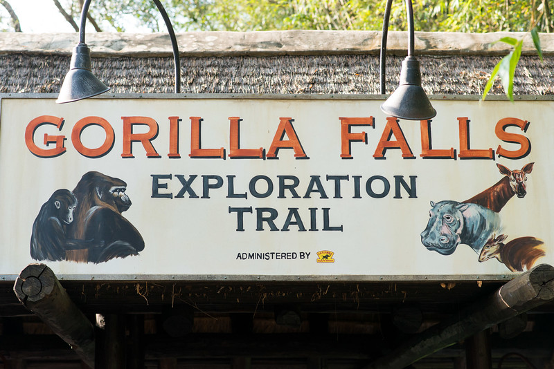 Gorilla Falls Exploration Trails - Animal Kingdom Walt Disney World