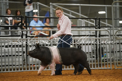 Hog Ringshots - Grand Drive and Showmanship