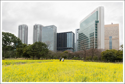 March at Hamarikyu