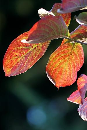 Autumn Colors by SMC Takumar 135/3.5