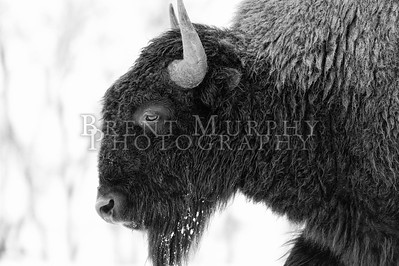 2020-11-24 Rocky Mountain Arsenal Wildlife Refuge