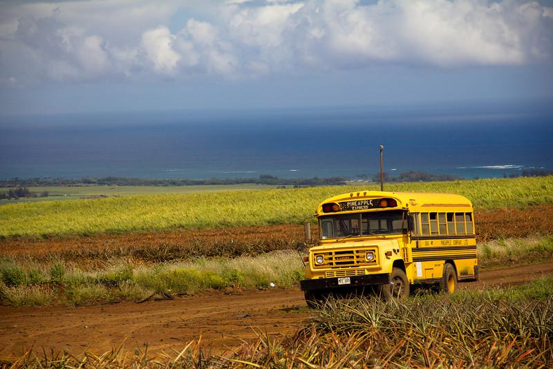 pineapple bus.jpg