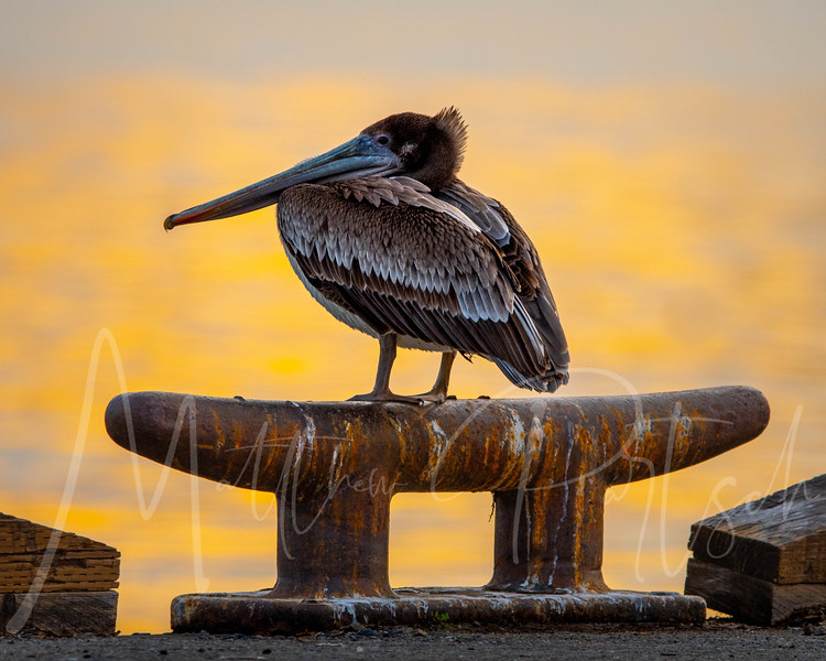 bird on a rope holder