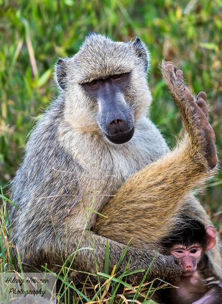 Kenya Wildlife-2.jpg