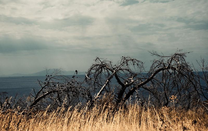 Burned trees, Charamida, Lesvos, Greece