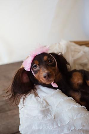 Hazel & Puppies