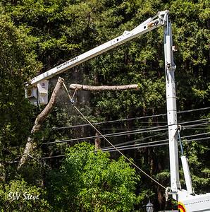 Meadowood Tree Removal