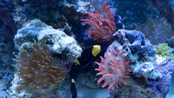 (Coral for sale)
