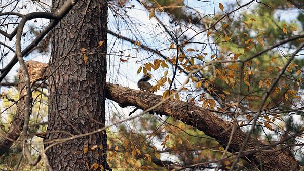 November 29, 2019:  One very noisy squirrel .  .  .