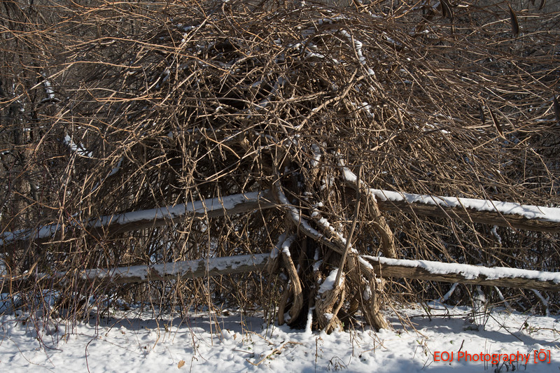 winter shoot.jpg