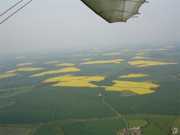 Yellow fields in the distance
