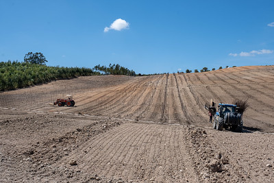Horto de São Silvestre - Plantação