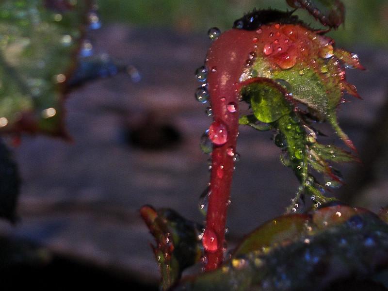 sep21_waterdrops.jpg