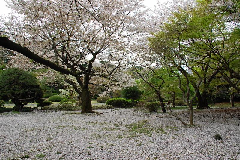 10-Japan07_1440.JPG