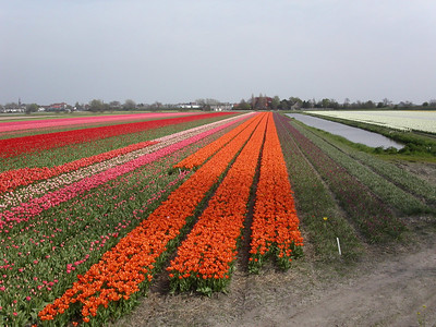 May Ride Through the Flower Bulb Fields
