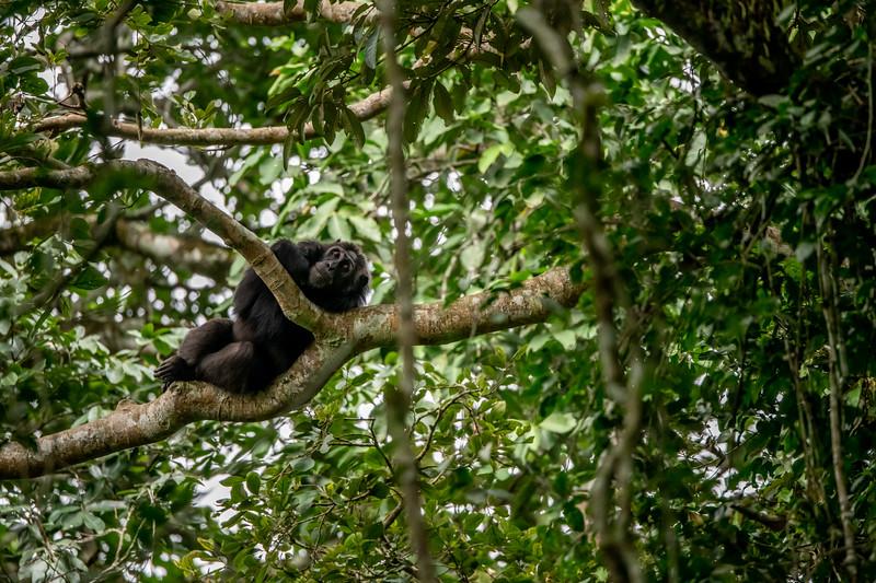 Uganda_T_Chimps-1032.jpg