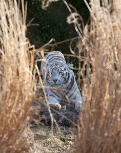 Franklin Park Zoo 2012
