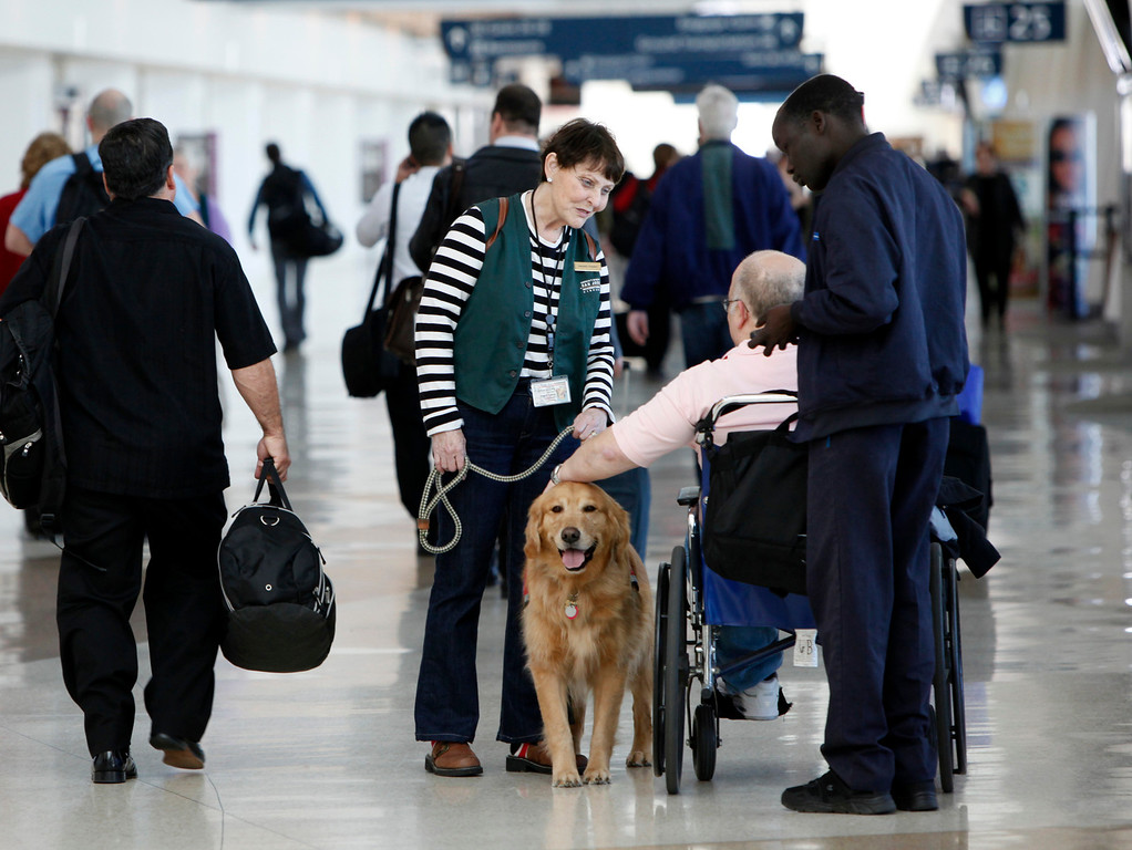""". Kyra Hubis and her \""""therapy dog\"""", Henry James, visit with Len Berkowitz, a traveler from Las Vegas at Mineta San Jose International Airport in San Jose, Calif. on Monday, Jan. 28, 2013. Henry James is one of eleven dogs used by the airport\'s interfaith chaplaincy to help passengers who are dealing with grief, stress, or need emotional support at the airport. (Karl Mondon/Staff)"""
